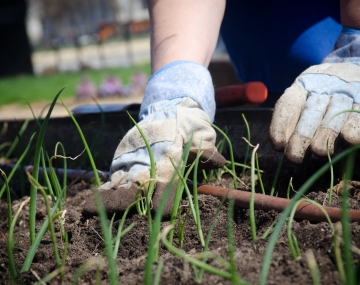 Gardening: The Secret To Better Mental Health For Care Home Residents