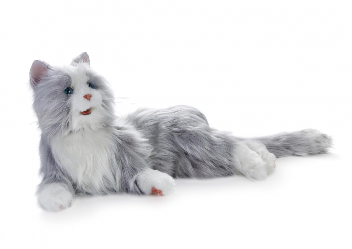 Silver Cat photo 1